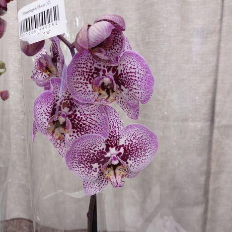 Орхидеи по 6000,6500,7000,7500
