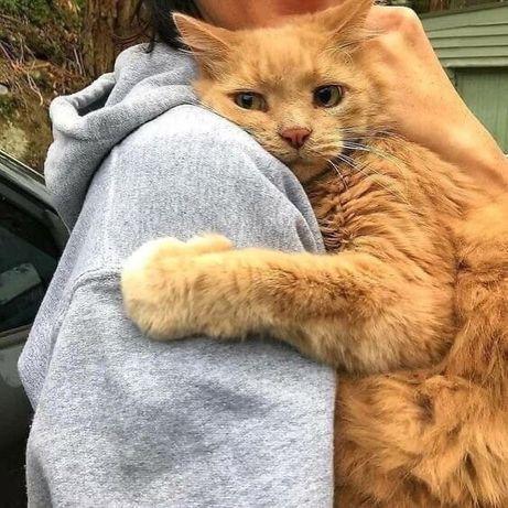 Человеку нужен кот, кот всегда его поймёт.