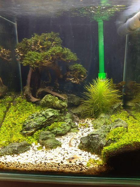 Amenajare, întreținere acvarii