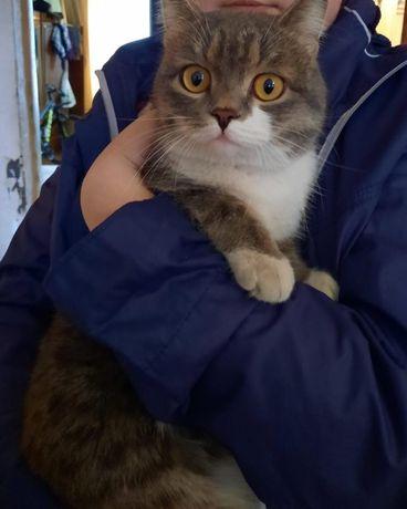 Найден кот на химах