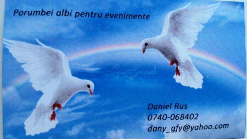 Inchirieri porumbei albi Alba Iulia - imagine 1