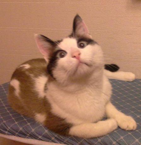 Потерялся котик Филл