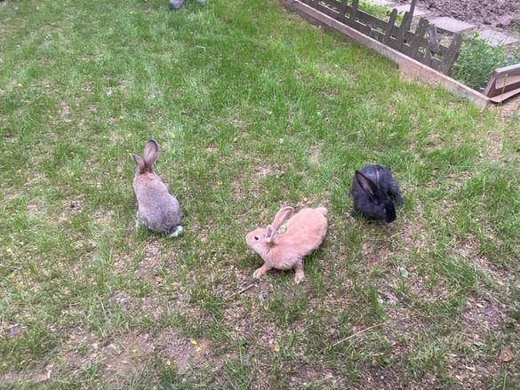 Зайци-биологично чисто!!!