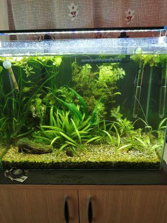 Acvariu 81l fara capac doar sticla+substrat+plante bonus.