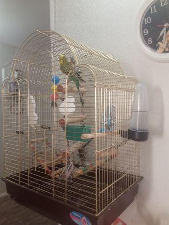 Продется папугаиы