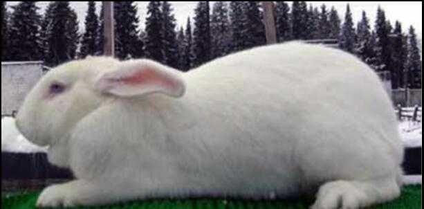 Срочно продам кролики