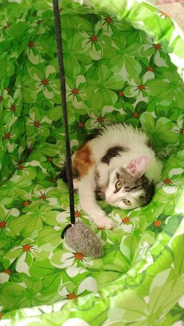 Бесплатно дарим котенка