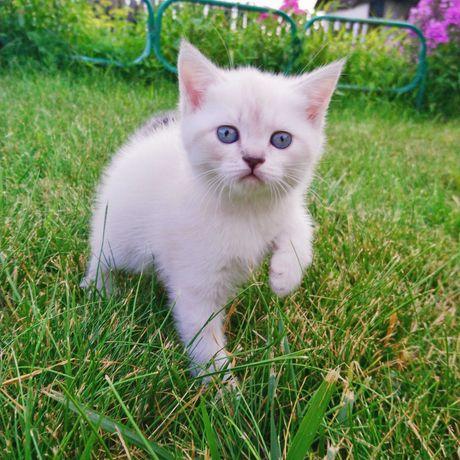 Белый котенок девочка