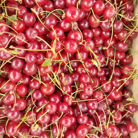 Ягоды вишня, малина, абрикосы, смородина, слива