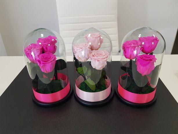 Trandafiri criogenati ciclam și rozi livrare gratuita în București