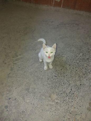 Нашли белава котенка
