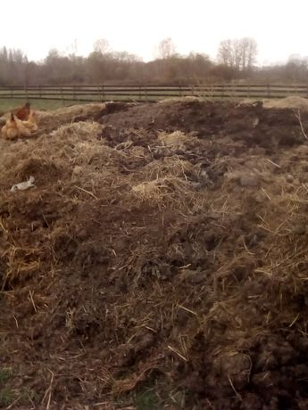 Gunoi de grajd (de la bovine) vechi de cca 4-5 ani