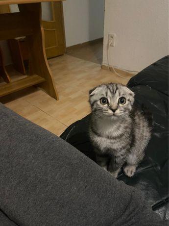Котенок продается породистая