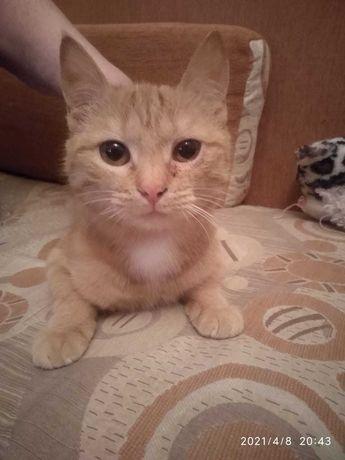 Отдам молодую стерилизованную кошку в заботливые руки