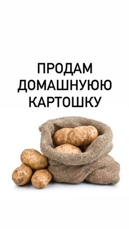 Продам домашнуюю картошку (картоп, картофель)