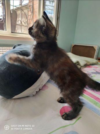 Дарю котенка-девочку