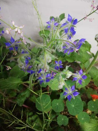 У Вас гибнут растения плохо растут???в теплицах,дома?мы поможем вам!!!