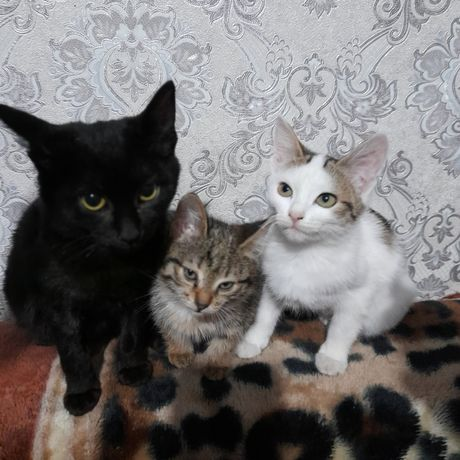 Котята знают лоток