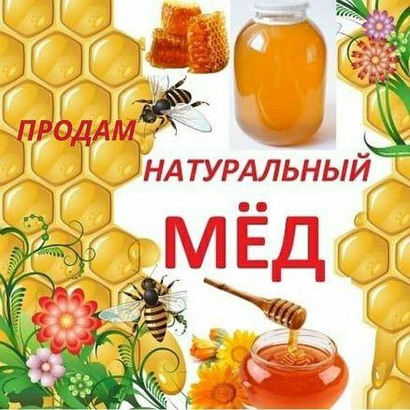 Мёд горный лепсинский