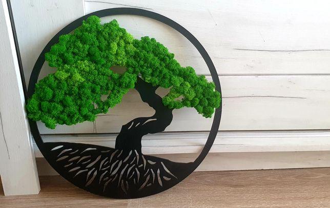 Aranjament cu licheni Bonsai 40 cm superb