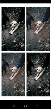 пропала собака...