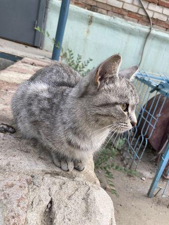 Кошка приученная