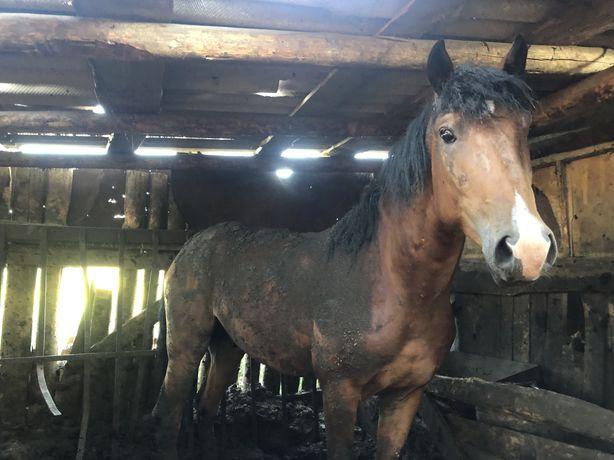 Продам жирную лошадь с откорма
