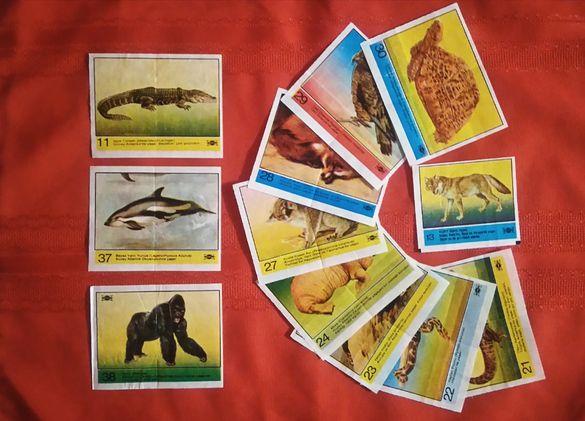 Картинки от дъвки- приоритет ТУРБО 1-50, КОСМОС, COLA Wildlife