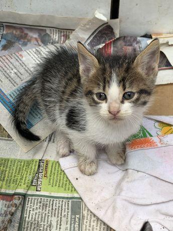 Pui de pisică pentru adopție