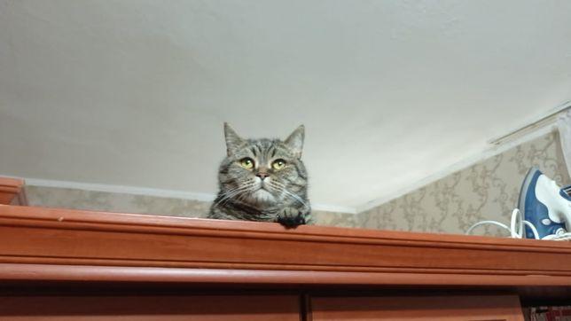 Пропал кот, 1 микрорайон