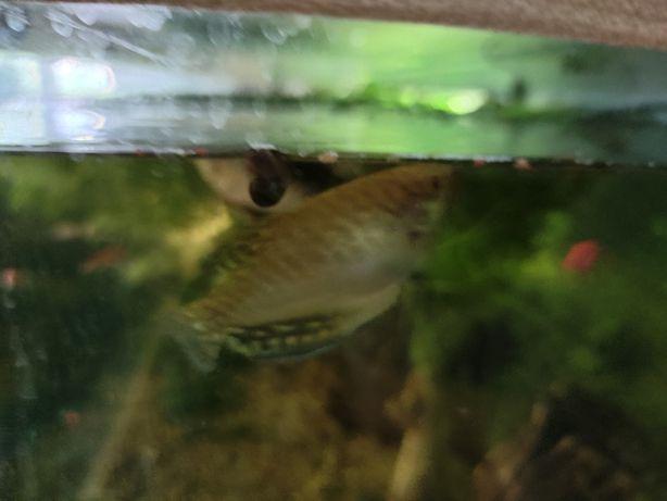 Рыбки Акварюмистика