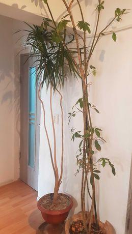 Palmier și plante decorative