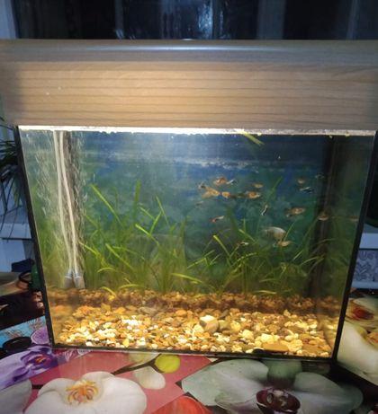 Аквариум с рыбками 35 литров