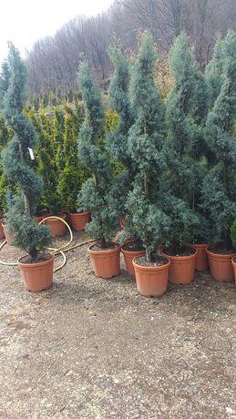 Plante  la ghiveci specialități palmieri etc