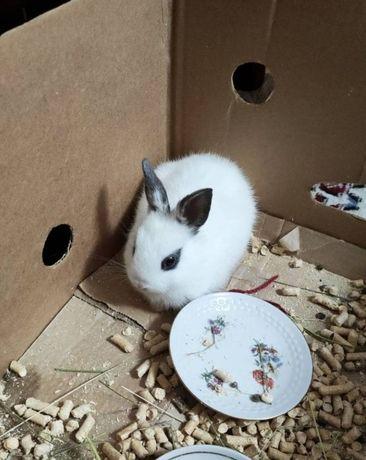 Продам белого кролика