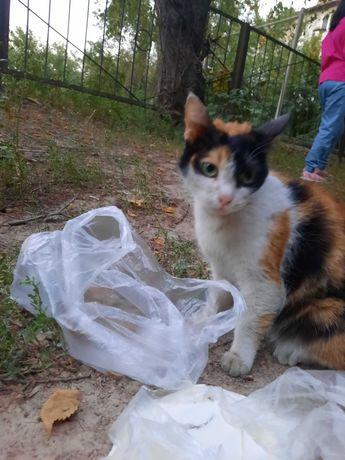 Найден кот. Ласковый кот ищет дом!