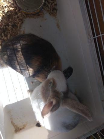 Продам кроликов 2 девочки