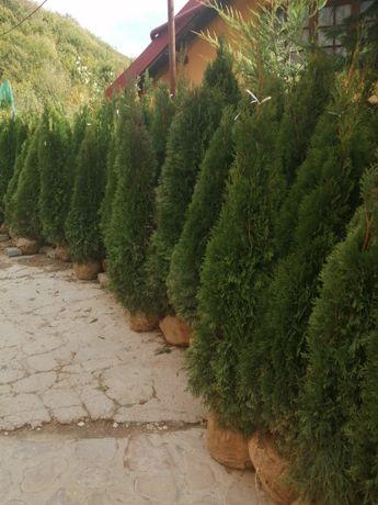 Plante ornamentale și spații verzi