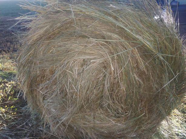 Продажа сено рулонами