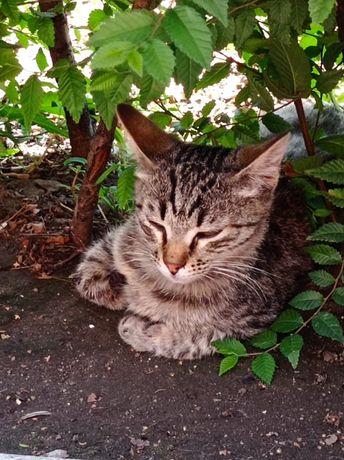 Котик подросток ищет дом!