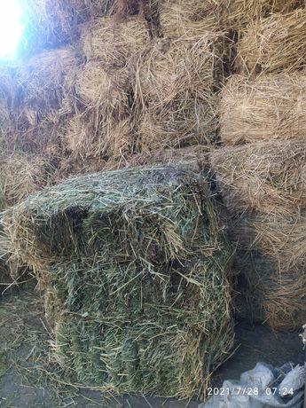 Бида трава продаю