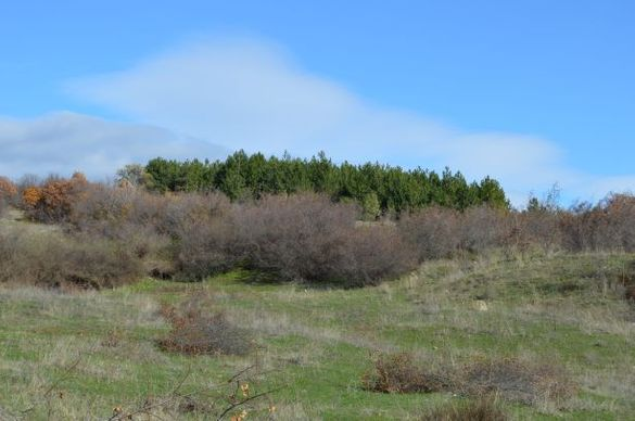 Парцел 600 кв. м, с. Богомилово, панорамен, под гора