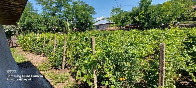 Casa taraneasca de vanzare