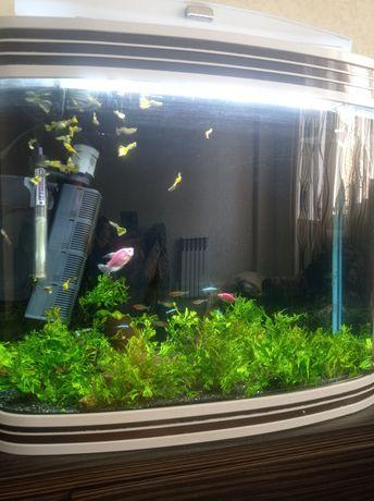 Срочно продам хороший аквариум