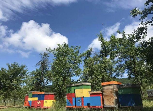 Vand 8 familii de albina, stupii sunt dublu Dadant pe 20 rame 1/1