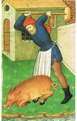 Забой и разделка туш свиней