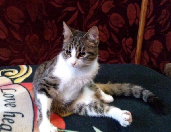 Donez pisica sterilizata, in varsta de 7 luni
