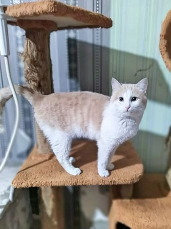 Кастрированный привитый чистоплотный и ласковый котик с доставкой