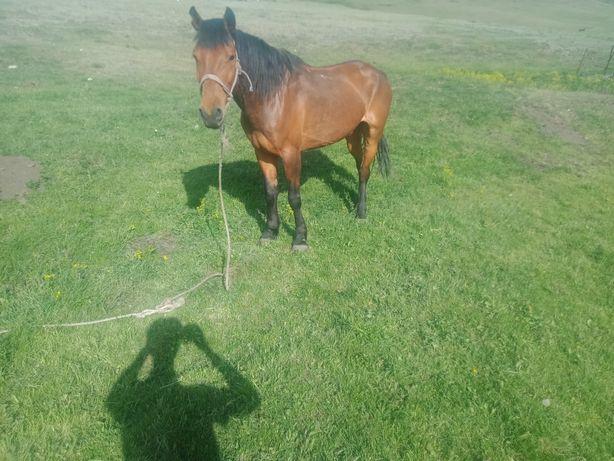 Жылкы Лошадь Продам