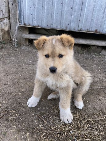 Красавчик щенок